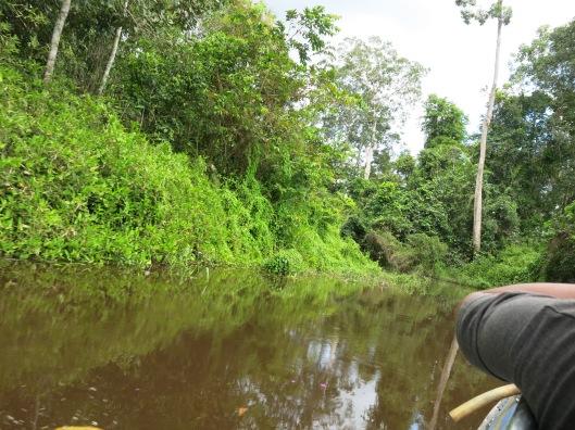 Menyusuri amazonnya Indonesia